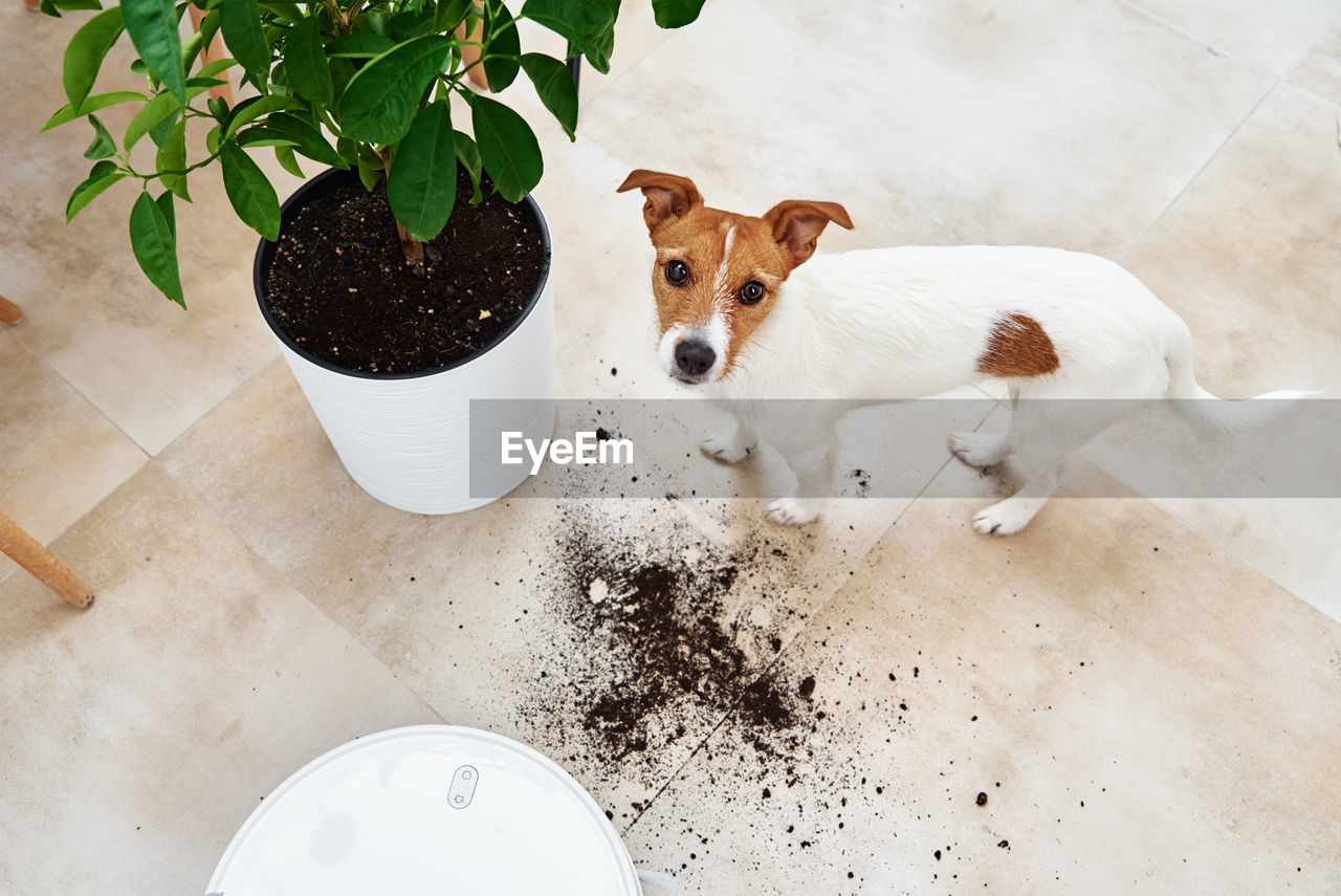 HIGH ANGLE VIEW OF DOG AND POTTED PLANT