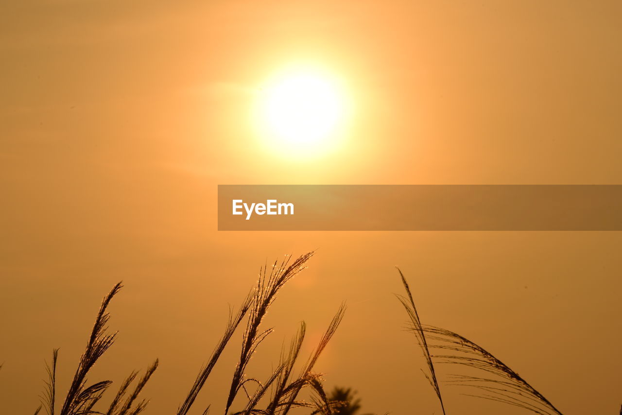sunset, sky, sun, beauty in nature, orange color, plant, scenics - nature, tranquility, nature, growth, sunlight, no people, tranquil scene, silhouette, outdoors, close-up, idyllic, agriculture, focus on foreground, bright, stalk, brightly lit, timothy grass, romantic sky