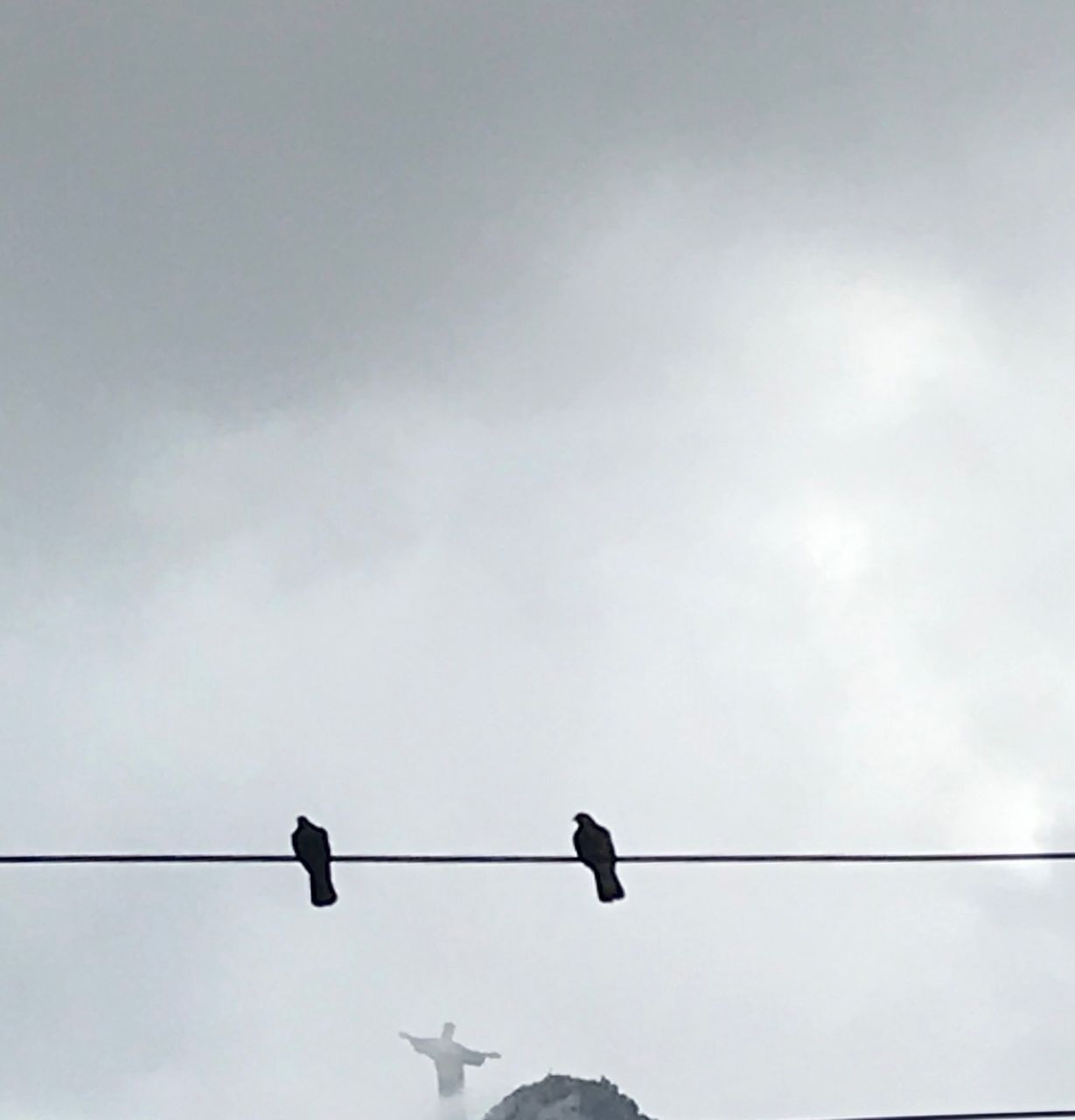 bird, vertebrate, animal, animal wildlife, animals in the wild, animal themes, sky, cable, perching, group of animals, cloud - sky, power line, low angle view, silhouette, electricity, connection, nature, no people, day, outdoors, power supply