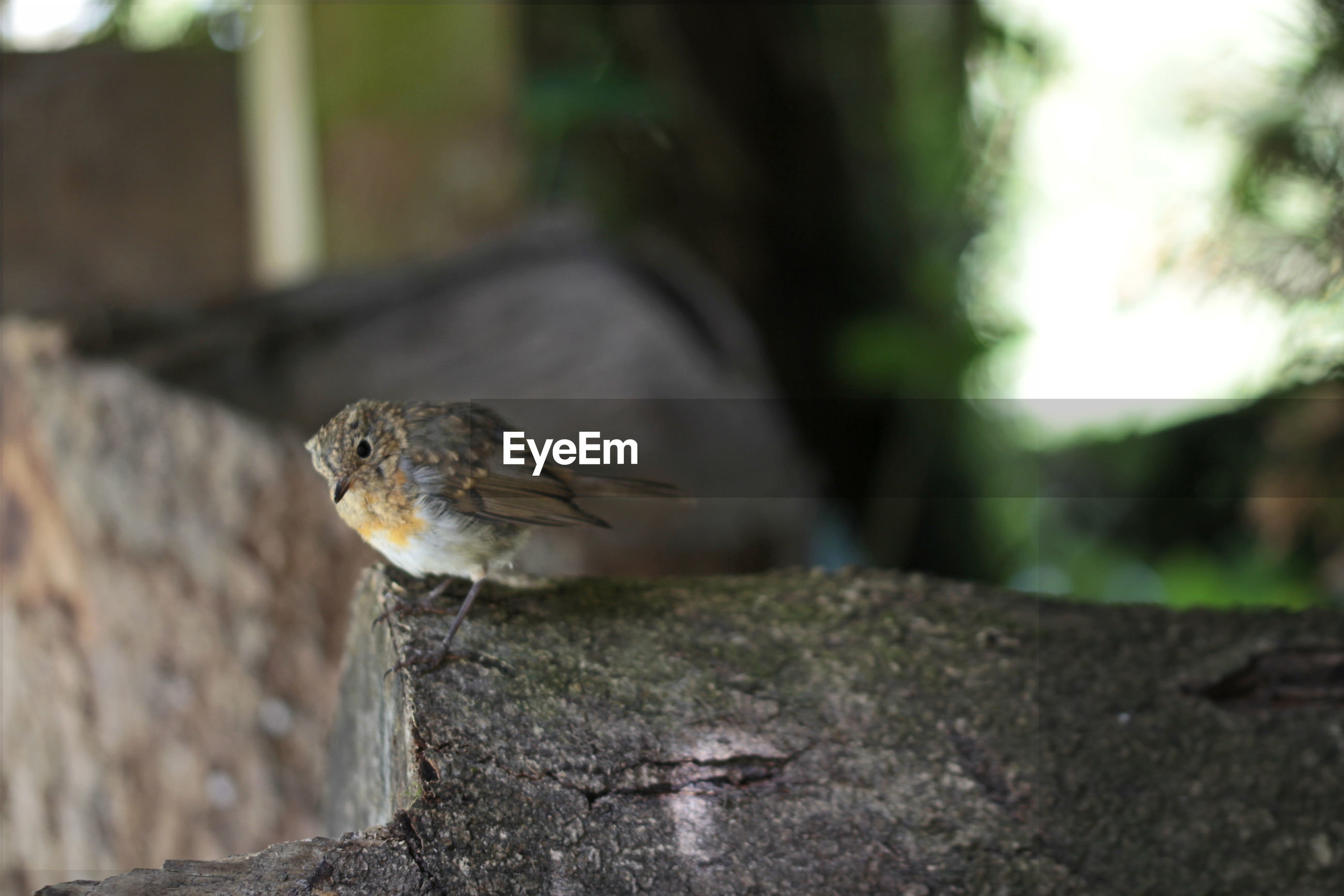 CLOSE-UP OF A BIRD PERCHING ON WOOD