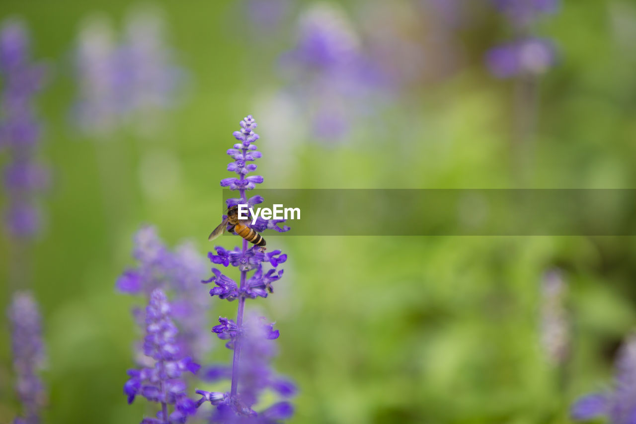 flowering plant, flower, freshness, plant, growth, vulnerability, beauty in nature, fragility, purple, insect, invertebrate, animal themes, close-up, animals in the wild, animal, petal, animal wildlife, day, one animal, nature, lavender, flower head, no people, pollination