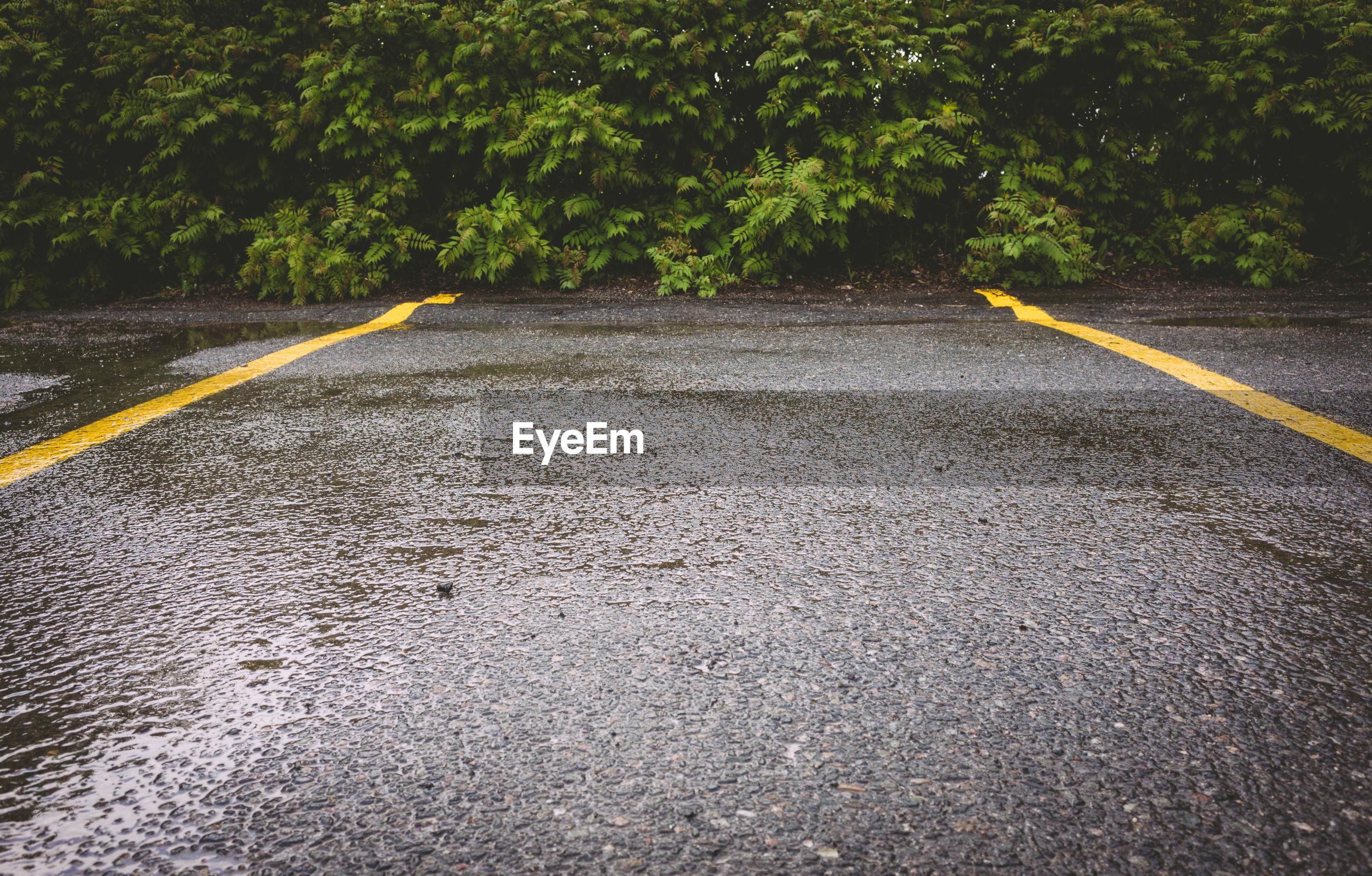 Wet empty road during rainy season