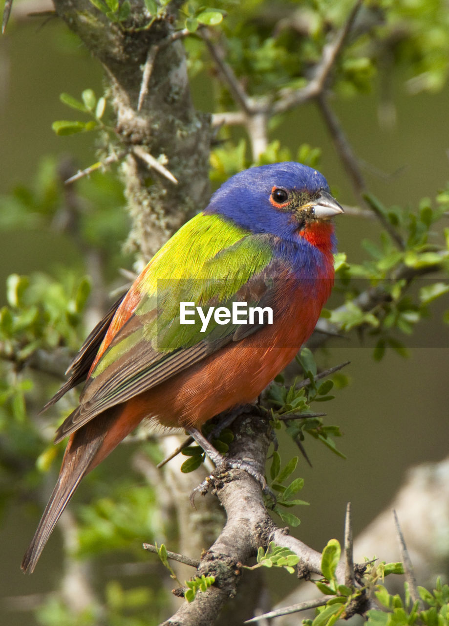 animal wildlife, animal themes, animals in the wild, one animal, animal, perching, vertebrate, bird, tree, plant, branch, day, focus on foreground, nature, close-up, no people, beauty in nature, outdoors, multi colored, beak, stick - plant part