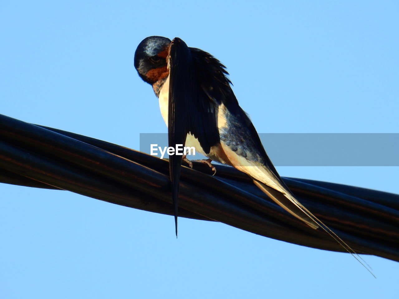 low angle view, clear sky, one animal, animal themes, animals in the wild, bird, blue, animal wildlife, day, perching, no people, outdoors, sky, close-up, nature