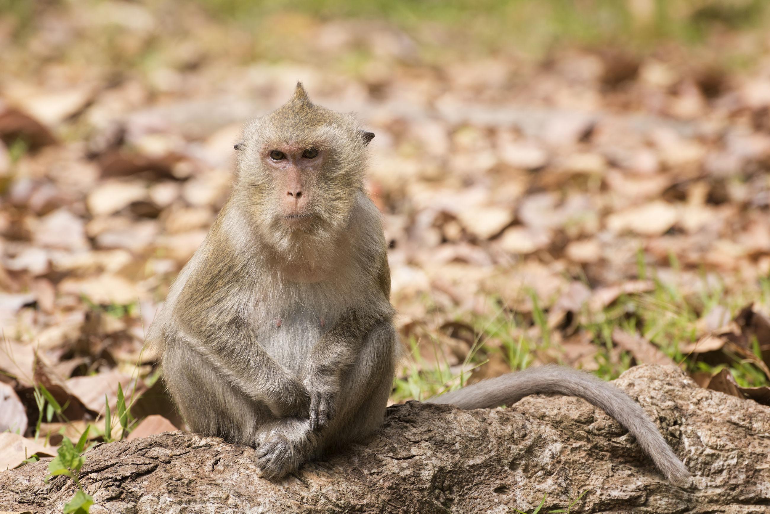 Portrait of monkey sitting on field