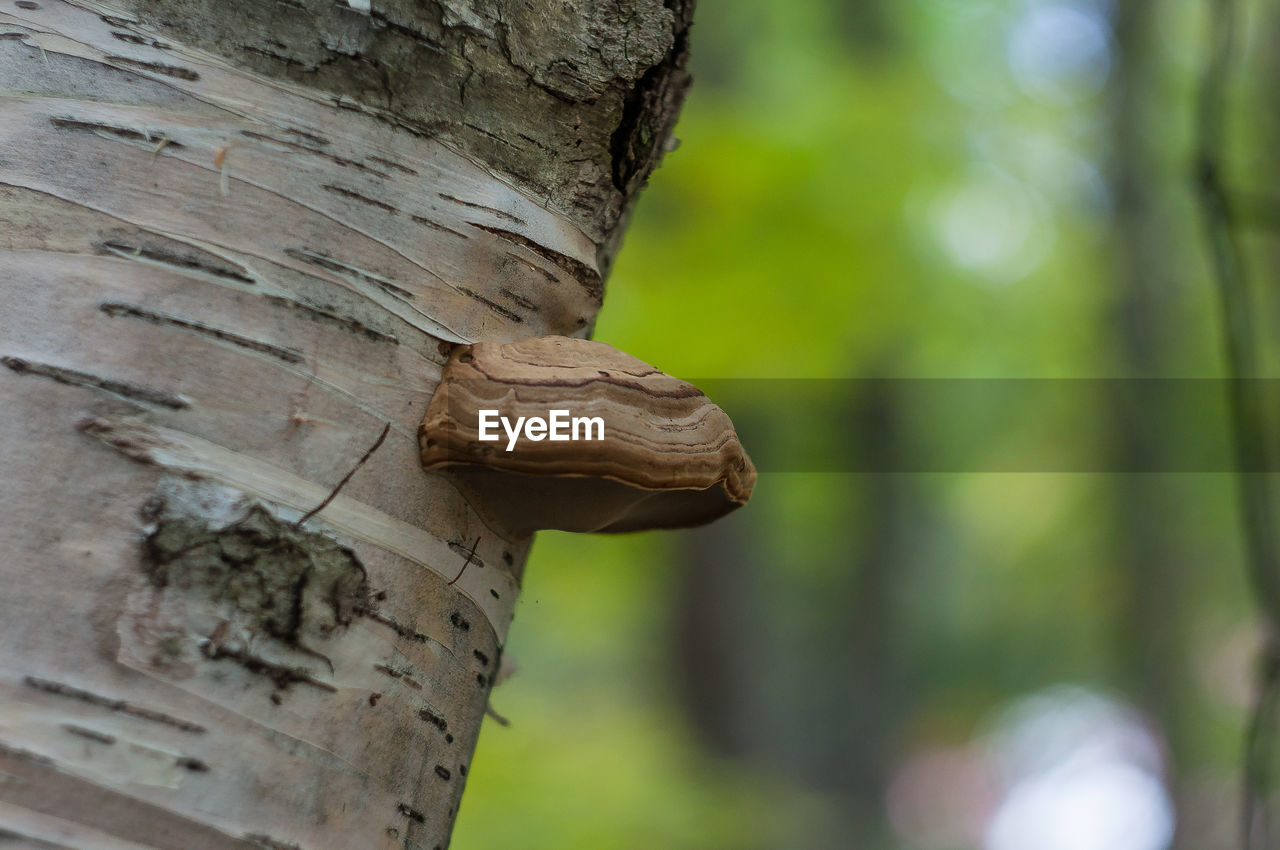 CLOSE-UP OF A TREE TRUNK