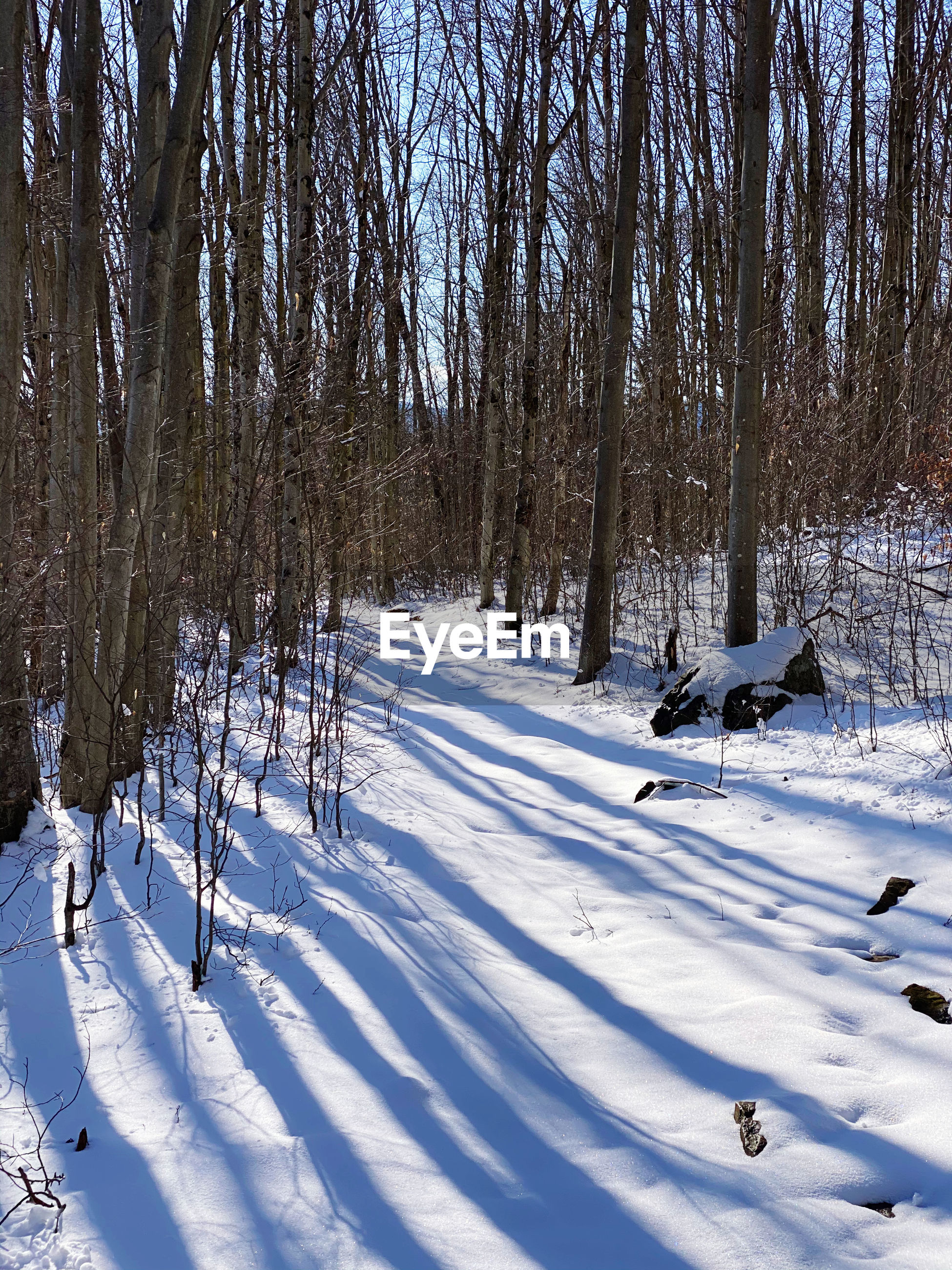 Bare trees on snow covered field during winter