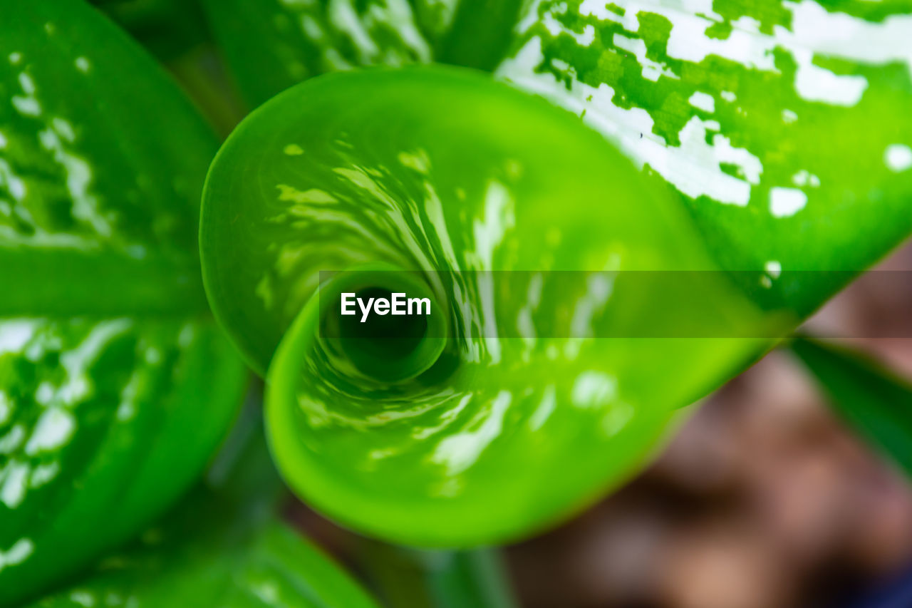 green color, close-up, no people, focus on foreground, plant, selective focus, nature, growth, leaf, beauty in nature, plant part, freshness, day, food and drink, food, outdoors, water, pattern, vegetable, wellbeing