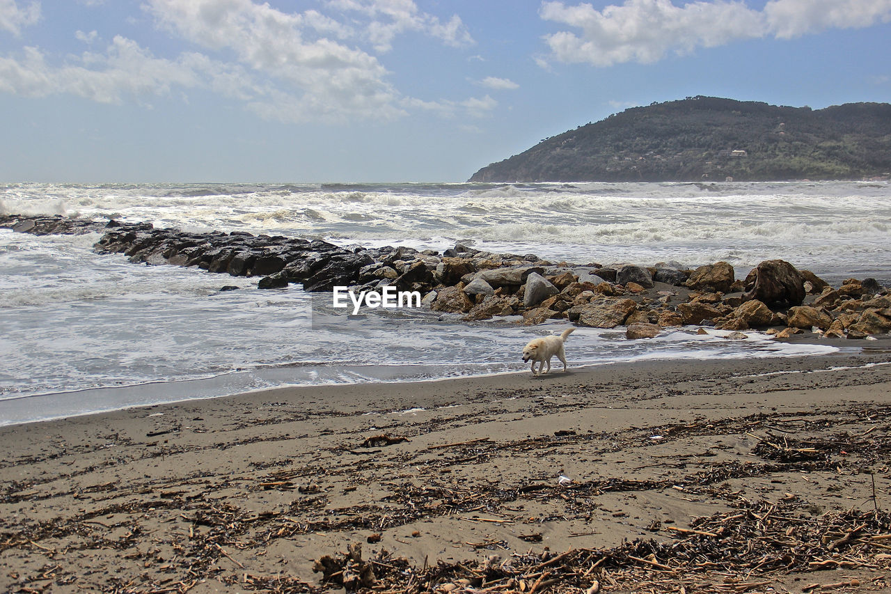 water, beach, sea, land, sky, beauty in nature, motion, scenics - nature, rock, wave, nature, day, animal, solid, animal themes, no people, rock - object, tranquility, sand, horizon over water, outdoors