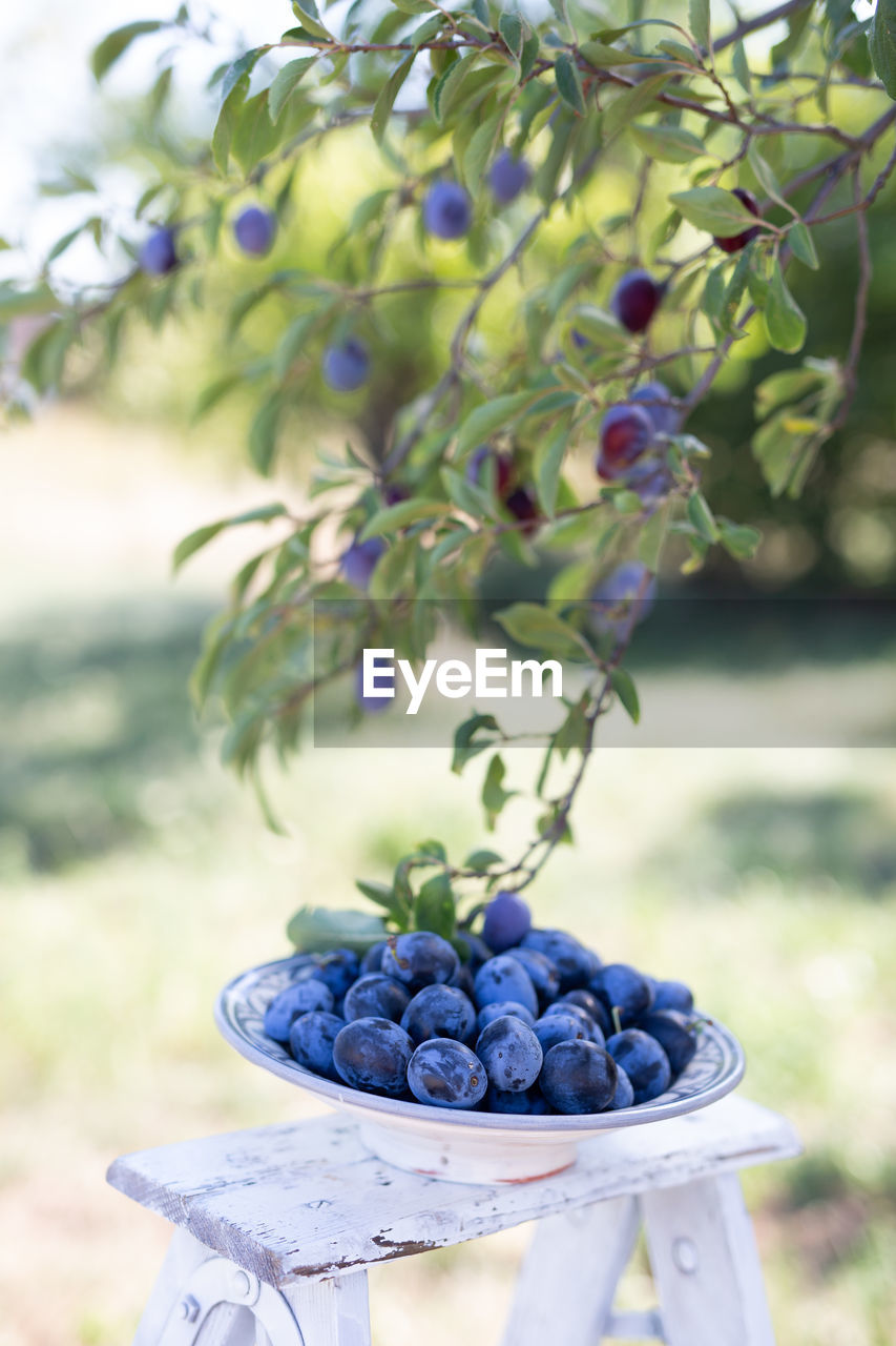 food and drink, healthy eating, fruit, food, wellbeing, freshness, berry fruit, blueberry, focus on foreground, close-up, day, plant, nature, no people, grape, still life, purple, ripe, outdoors, blackberry - fruit