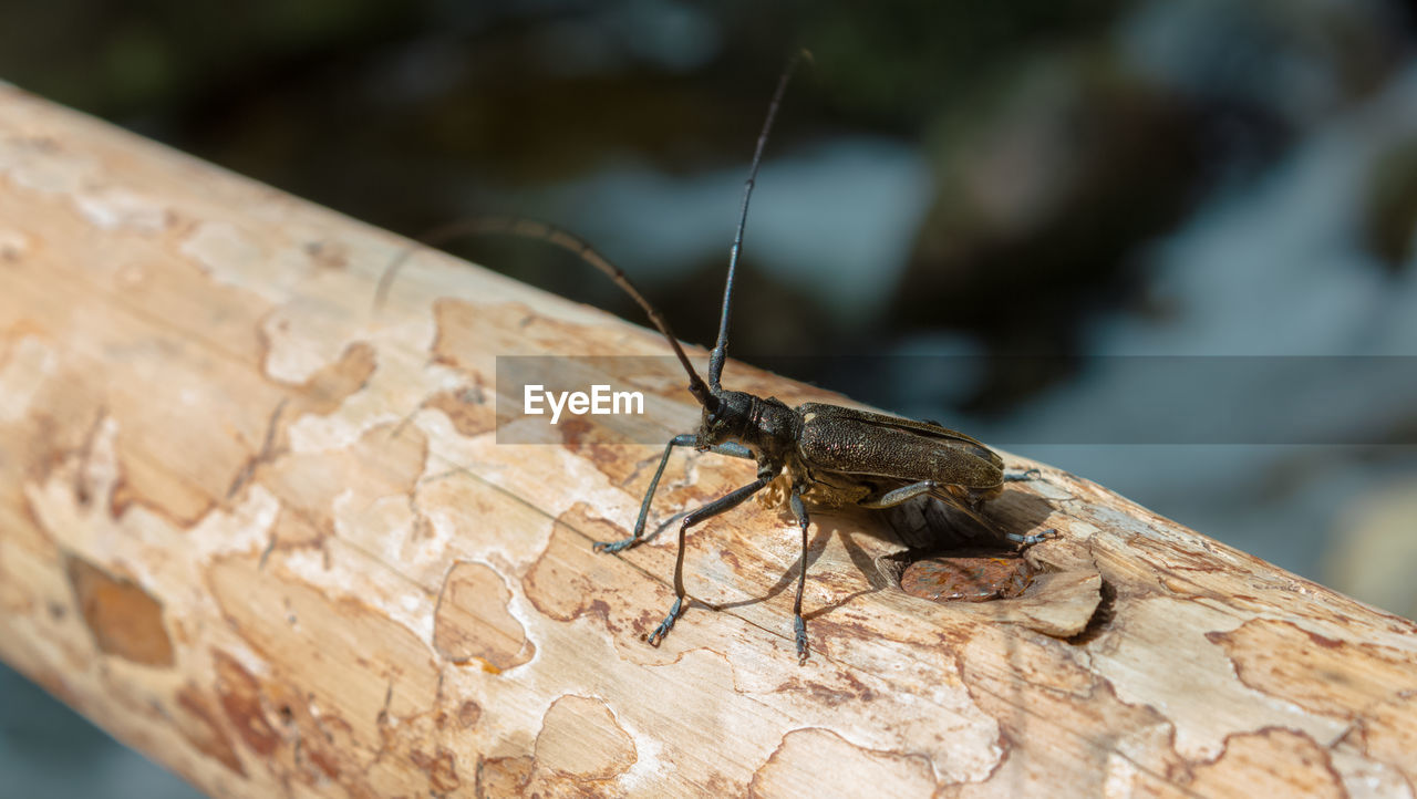 one animal, invertebrate, animal, insect, animals in the wild, animal wildlife, animal themes, focus on foreground, close-up, selective focus, day, no people, nature, outdoors, animal antenna, wood - material, animal body part, brown, tree, solid, butterfly - insect
