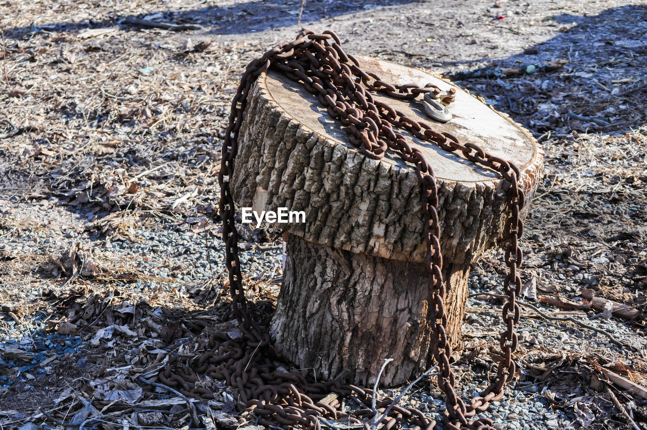 one animal, day, no people, outdoors, wood - material, nature, animal themes, close-up