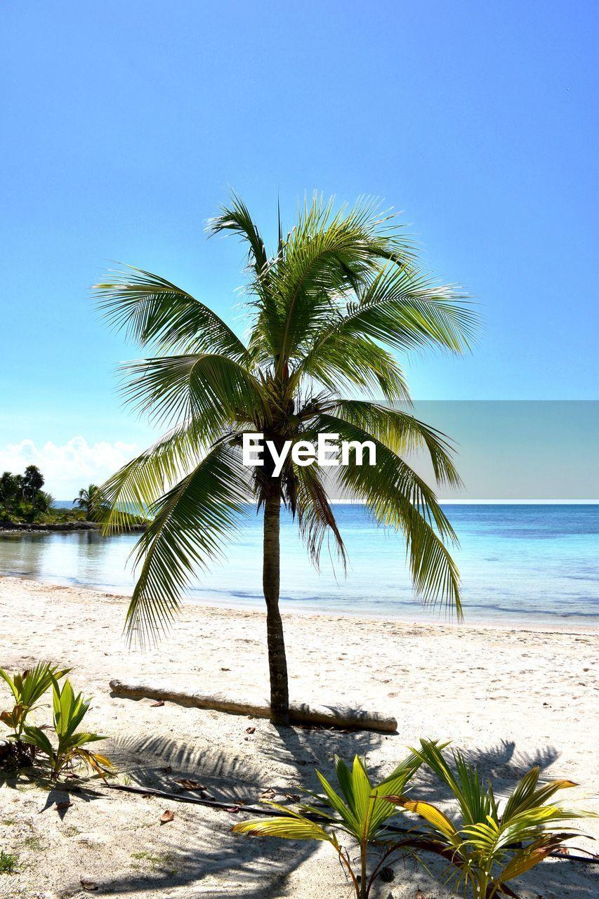 COCONUT PALM TREE ON BEACH AGAINST CLEAR SKY
