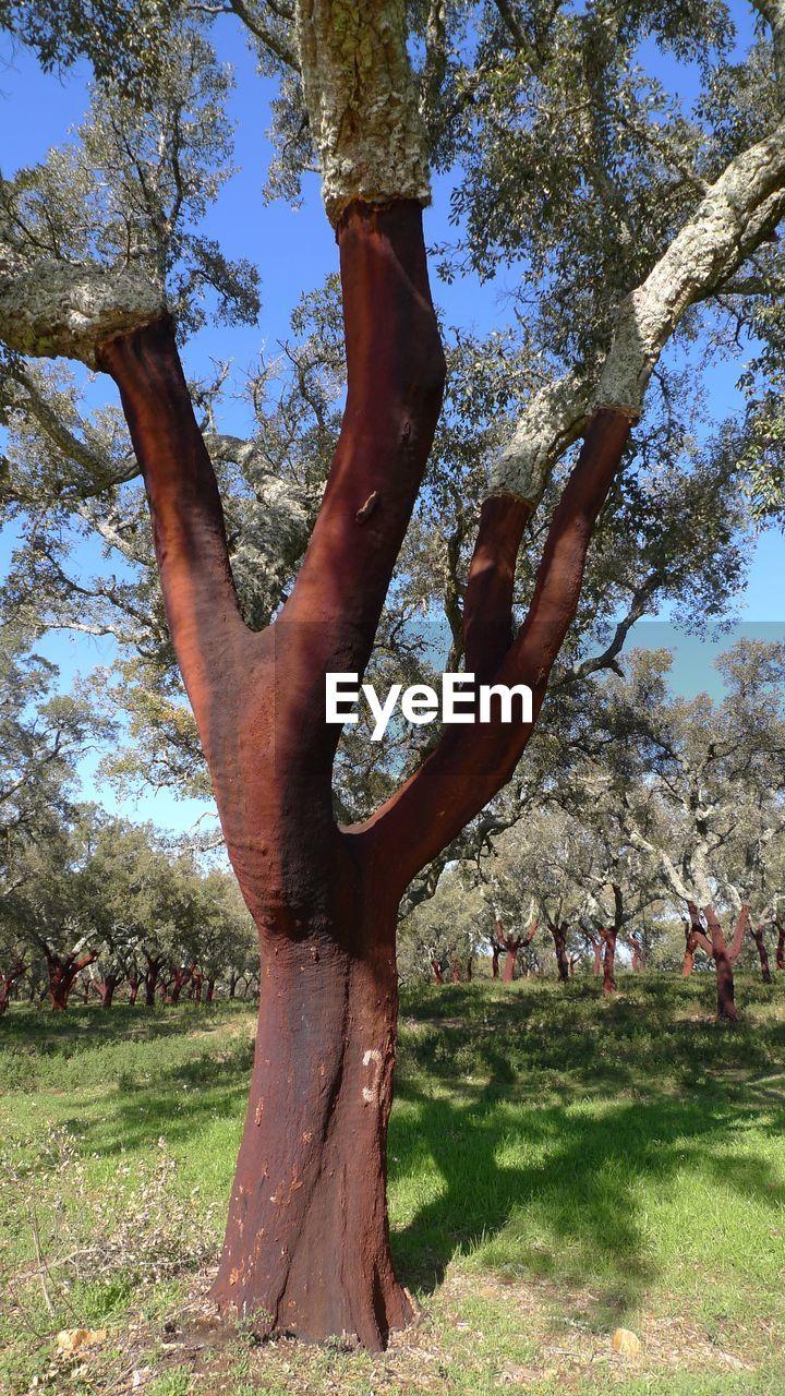 TREE ON GRASSY FIELD IN PARK