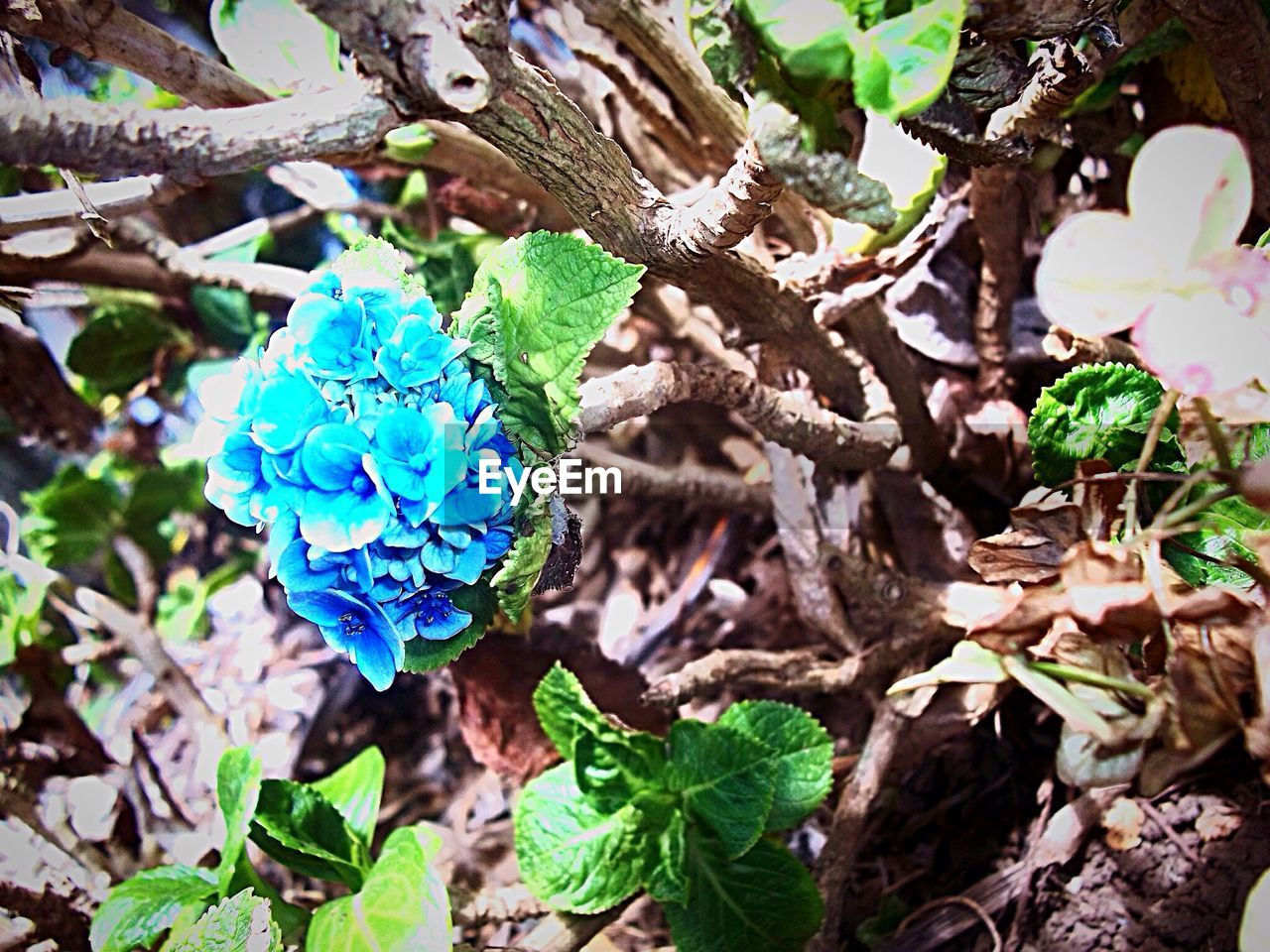 growth, plant, nature, beauty in nature, no people, leaf, fragility, outdoors, day, freshness, close-up, flower, tree, flower head