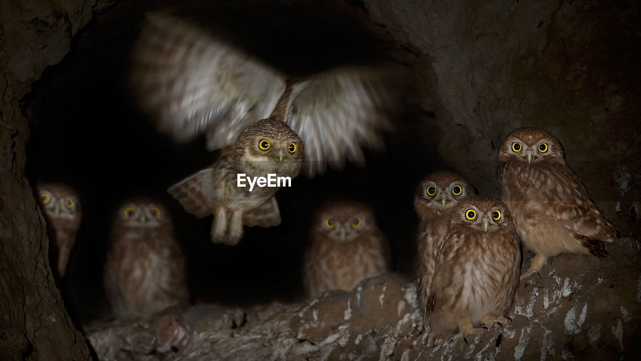 Low Angle Portrait Of Owls Perching On Tree At Night