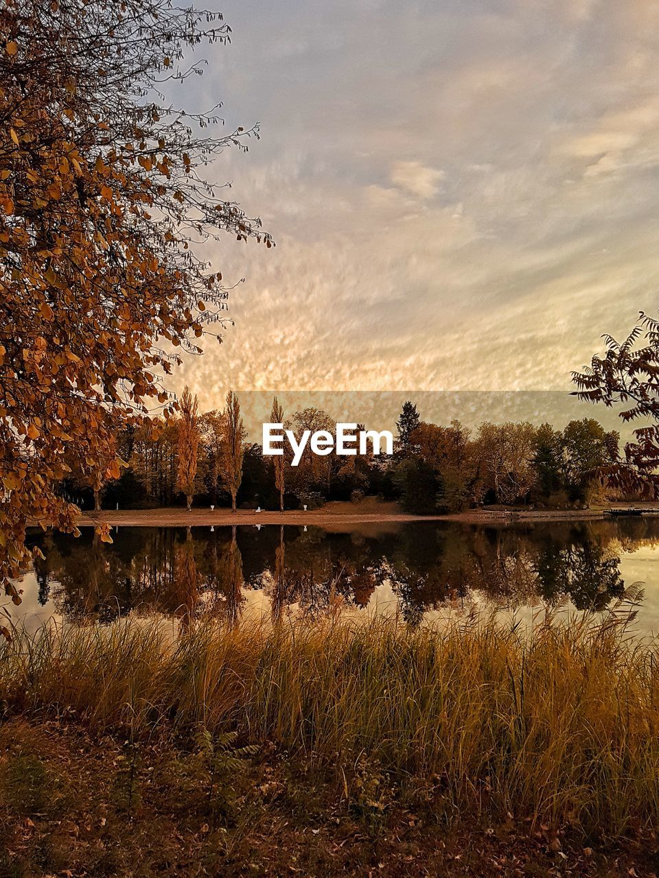 plant, tree, sky, cloud - sky, tranquility, lake, water, tranquil scene, nature, scenics - nature, beauty in nature, no people, reflection, growth, grass, non-urban scene, autumn, outdoors, land