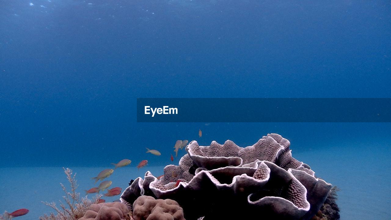 Coral at isla verde