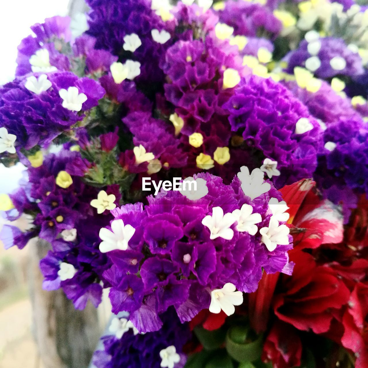 flower, purple, fragility, beauty in nature, petal, freshness, nature, growth, no people, plant, flower head, day, close-up, outdoors, blooming