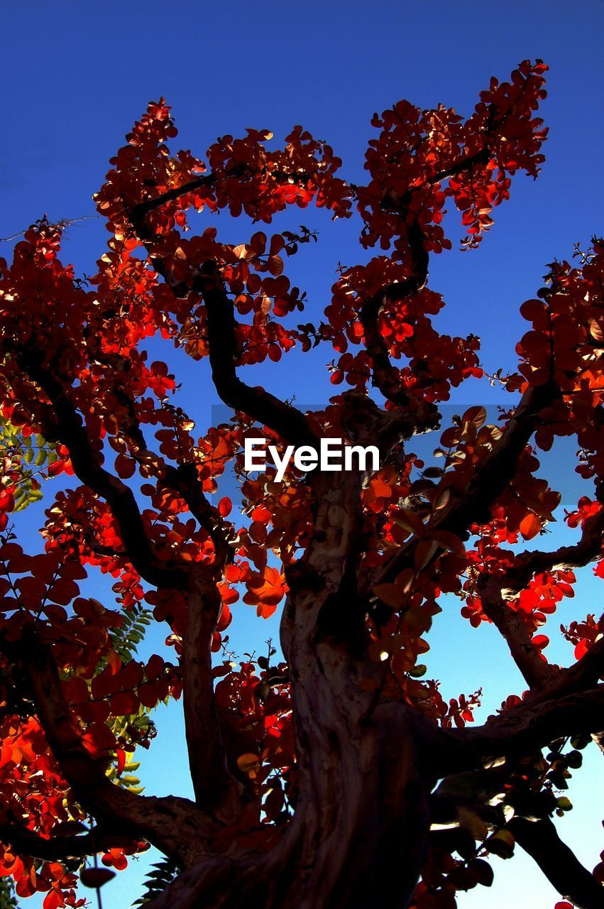 tree, growth, low angle view, nature, no people, branch, day, beauty in nature, clear sky, outdoors, sky, close-up