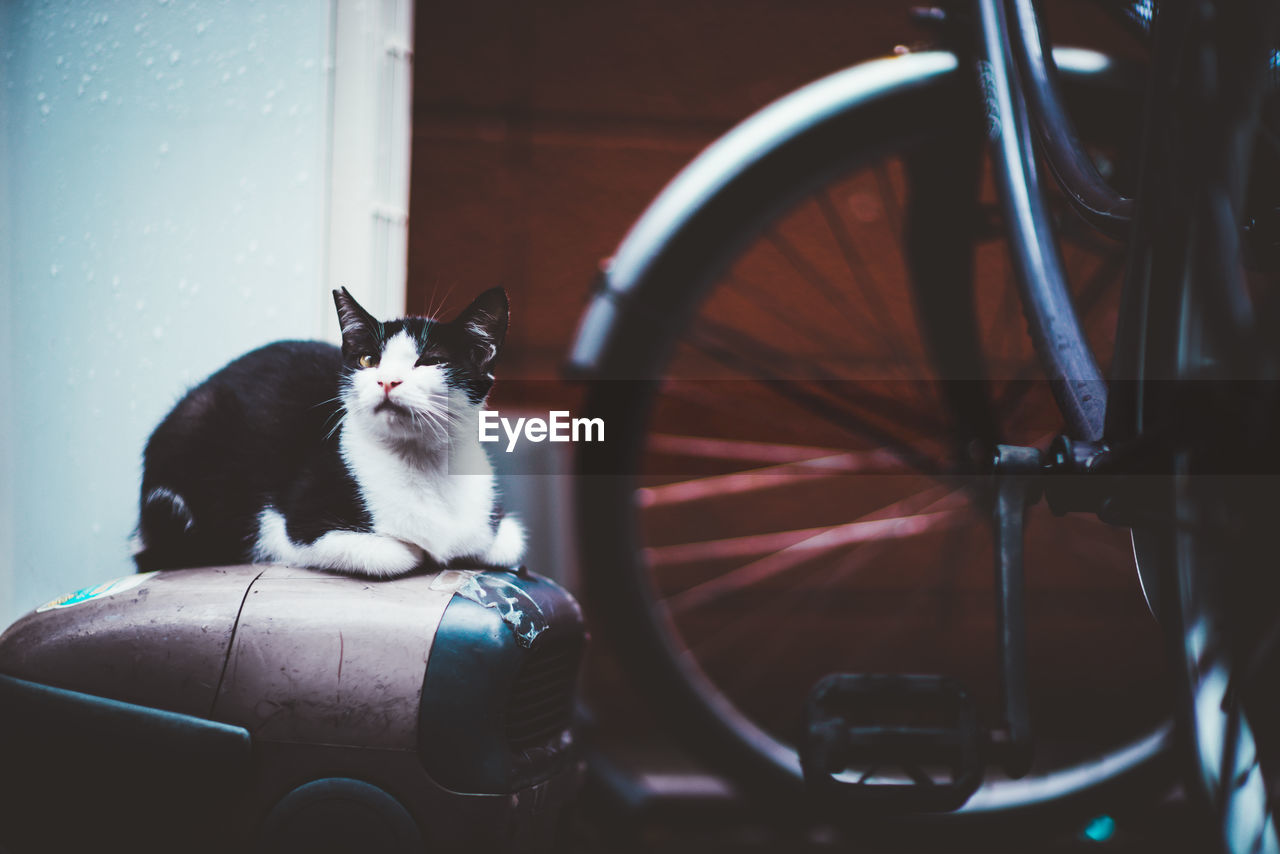 domestic animals, domestic, pets, cat, mammal, feline, animal, domestic cat, animal themes, one animal, vertebrate, land vehicle, transportation, mode of transportation, sitting, wheel, no people, day, metal, indoors, tire, whisker
