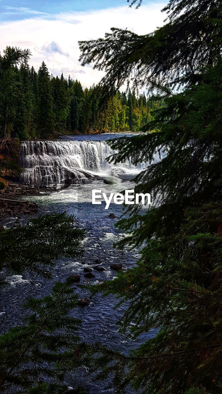 water, tree, flowing water, beauty in nature, scenics - nature, motion, waterfall, long exposure, plant, blurred motion, nature, no people, sky, forest, flowing, day, land, environment, growth, power in nature, outdoors, running water, falling water