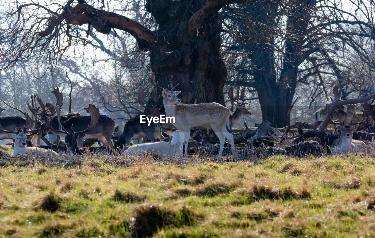 tree, plant, animal wildlife, animals in the wild, animal, mammal, animal themes, group of animals, deer, land, nature, grass, no people, trunk, tree trunk, forest, day, field, vertebrate, outdoors, herbivorous, herd, woodland