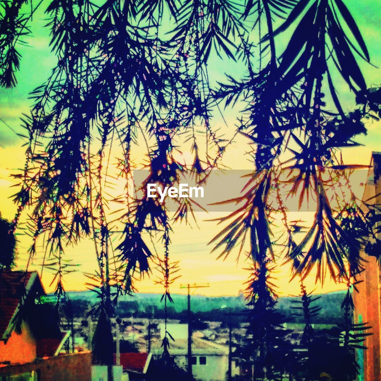 plant, tree, no people, nature, growth, sky, beauty in nature, branch, outdoors, day, silhouette, tranquility, sunset, close-up, focus on foreground, scenics - nature, selective focus, sunlight, water, low angle view, coniferous tree