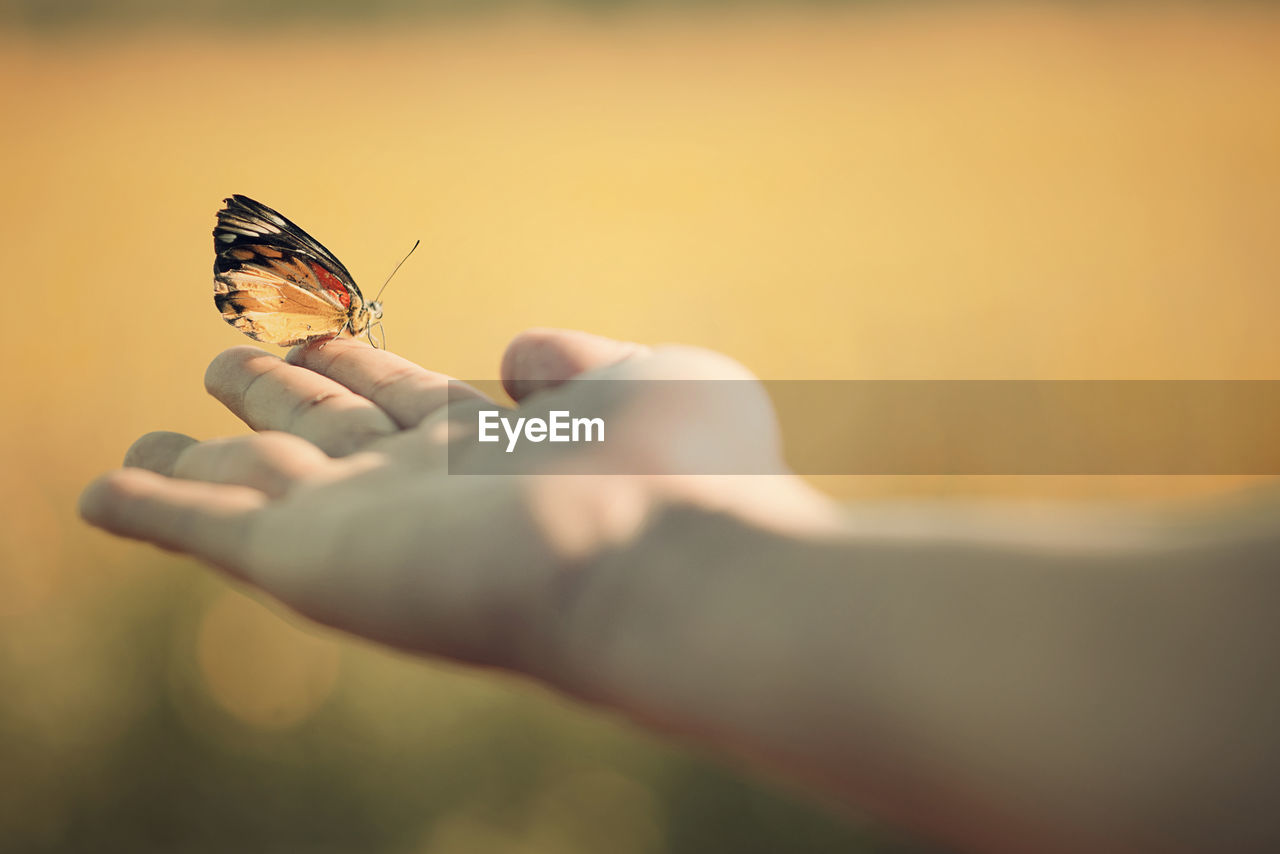 Cropped hand holding butterfly outdoors