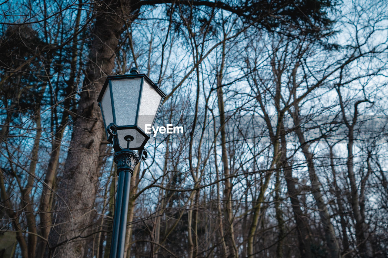 LOW ANGLE VIEW OF STREET LIGHT AND BARE TREES