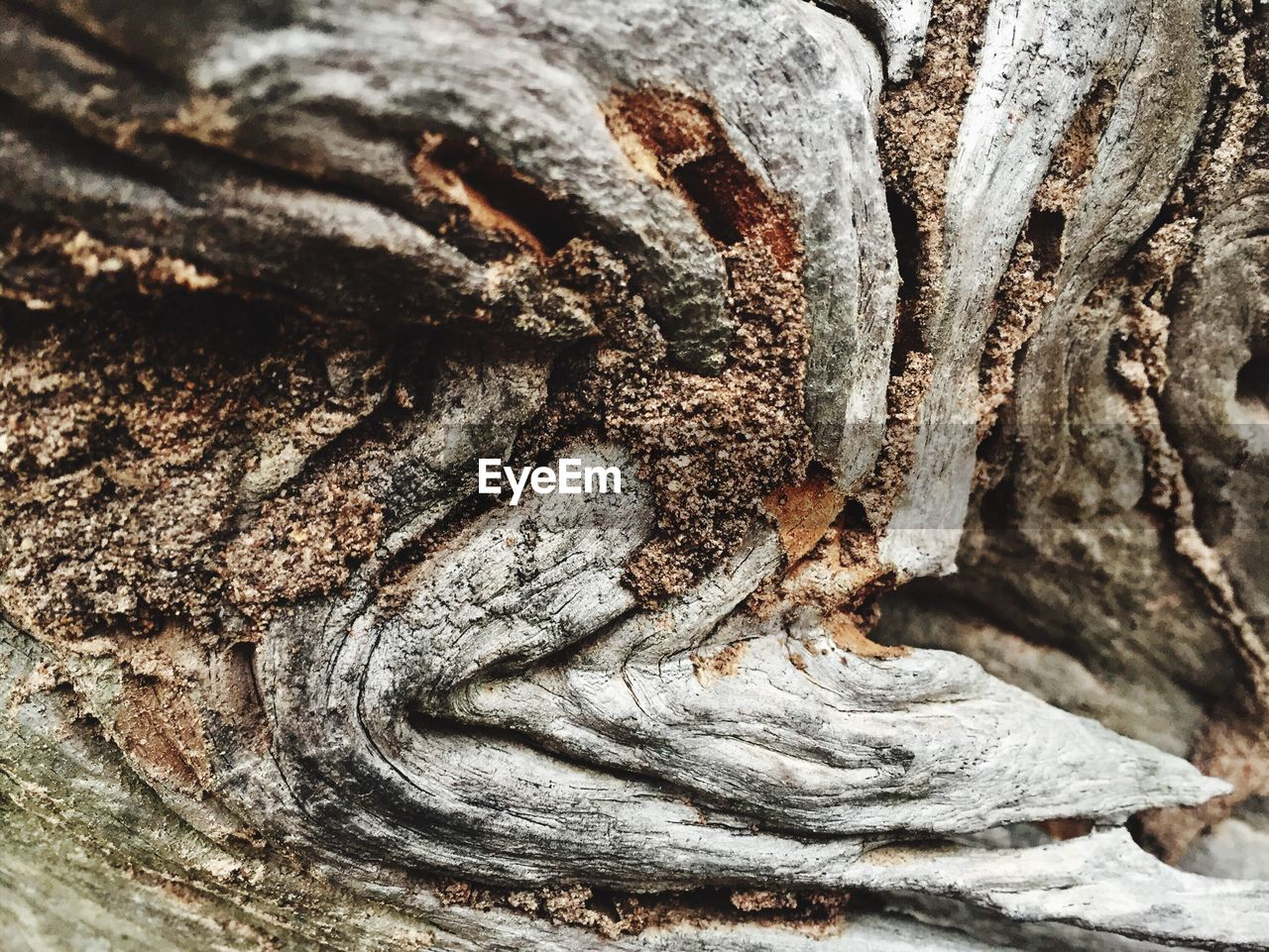 Full frame shot of tree stump
