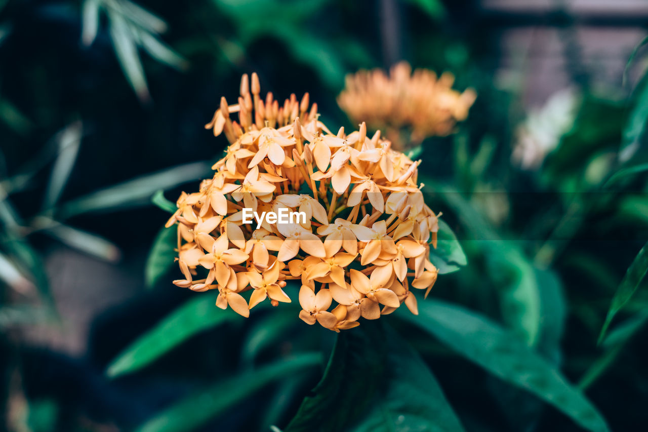 growth, nature, beauty in nature, flower, petal, plant, fragility, freshness, green color, focus on foreground, no people, blooming, outdoors, flower head, day, leaf, close-up