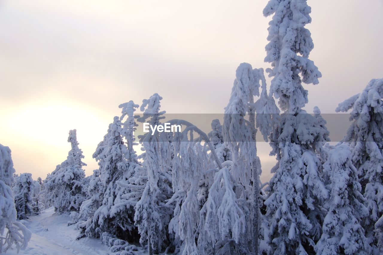 winter, snow, cold temperature, sky, beauty in nature, nature, covering, tranquility, frozen, tranquil scene, plant, scenics - nature, tree, no people, white color, environment, day, non-urban scene, outdoors, coniferous tree