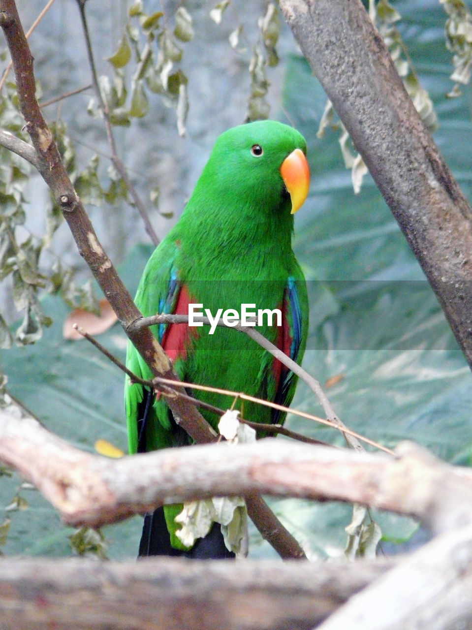one animal, perching, animal themes, animals in the wild, green color, branch, day, animal wildlife, focus on foreground, bird, nature, tree, no people, outdoors, beauty in nature, close-up, rainbow lorikeet