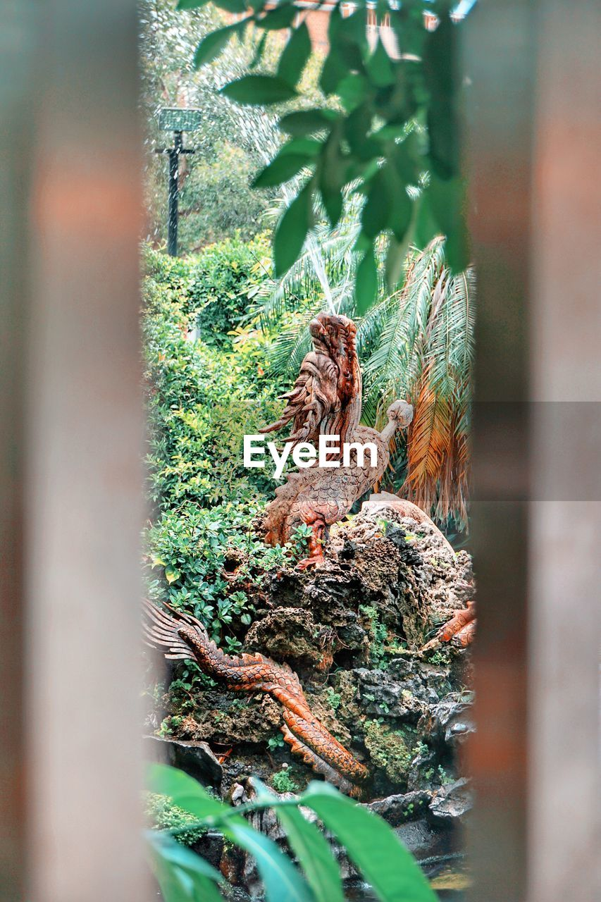 selective focus, plant, no people, day, nature, tree, animal, outdoors, wood - material, animal themes, growth, animals in the wild, close-up, animal wildlife, moss, green color, vertebrate, forest, tree trunk, trunk