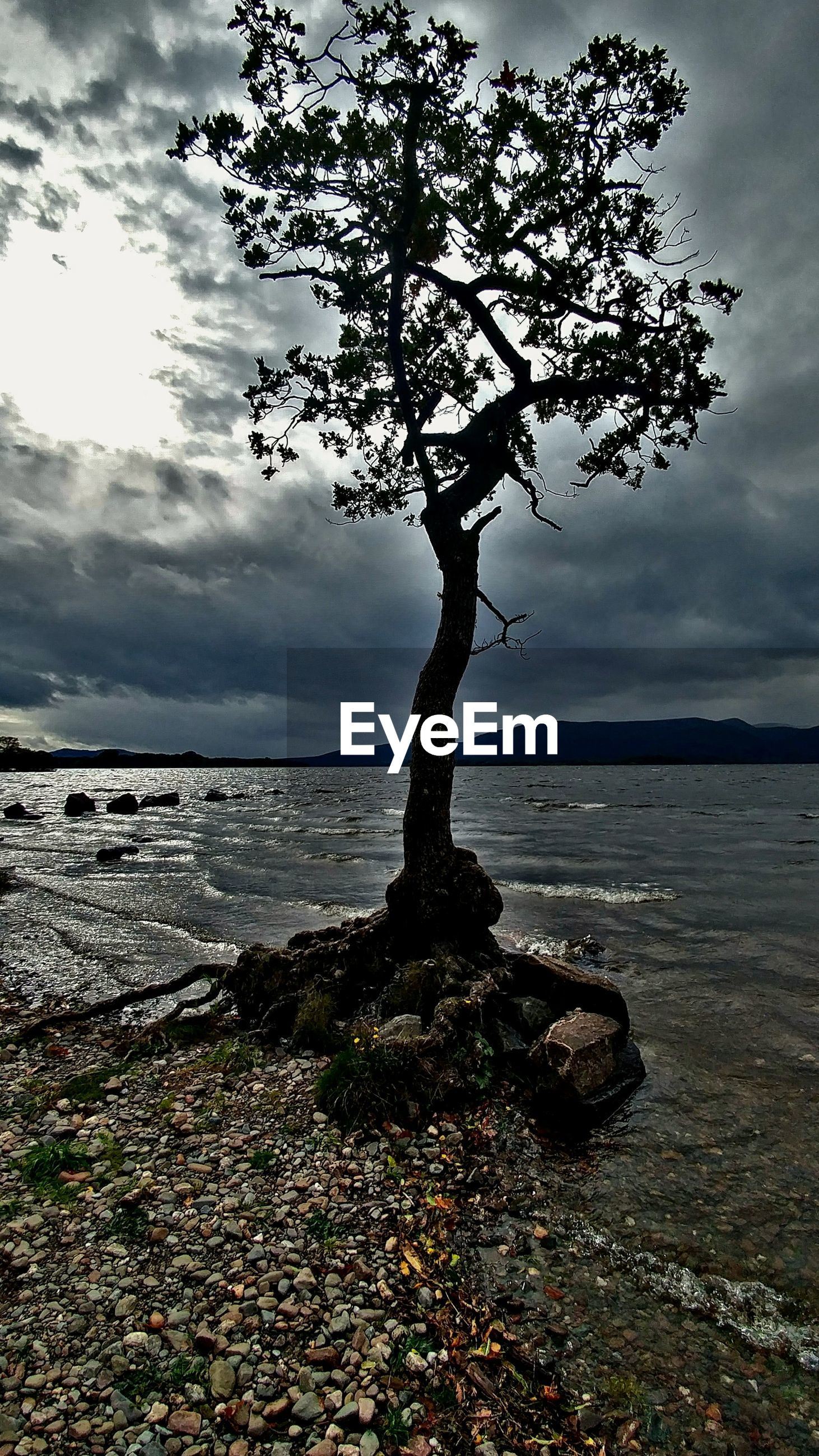 TREE GROWING ON BEACH AGAINST SKY