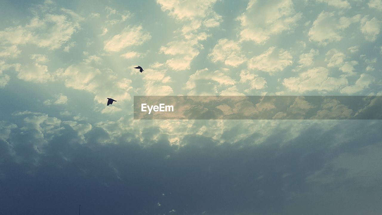 cloud - sky, sky, vertebrate, bird, animal themes, low angle view, animal, animal wildlife, animals in the wild, flying, beauty in nature, one animal, mid-air, no people, nature, day, silhouette, tranquility, outdoors, tranquil scene