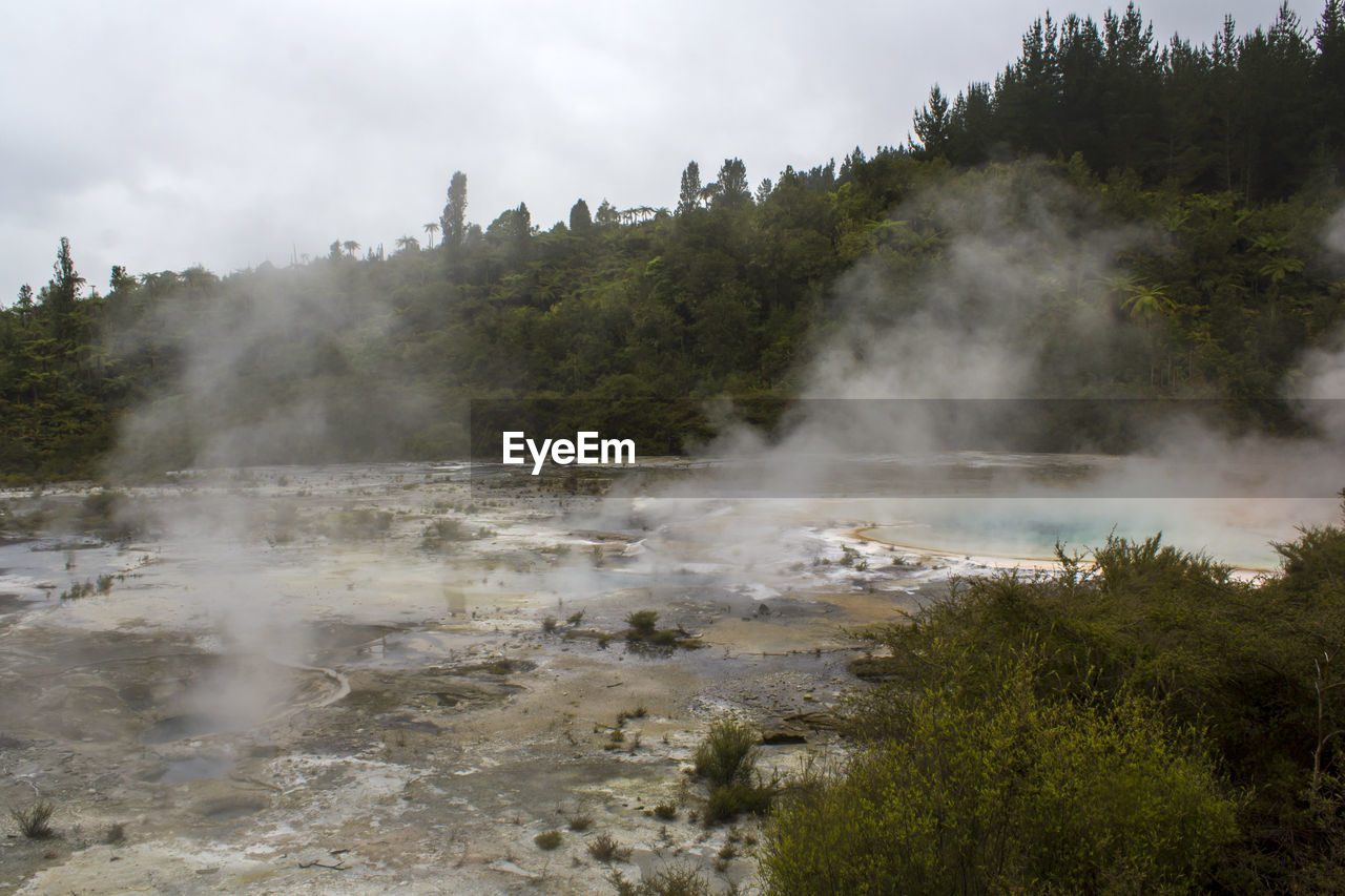 steam, tree, smoke - physical structure, plant, heat - temperature, sky, nature, hot spring, environment, no people, geology, water, land, day, environmental issues, beauty in nature, landscape, non-urban scene, outdoors, pollution, power in nature, air pollution