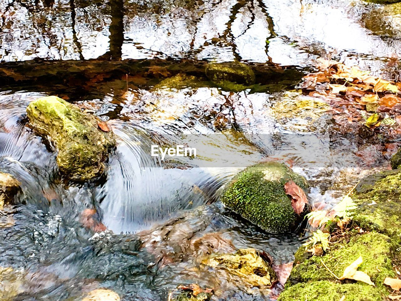 river, rock - object, water, nature, beauty in nature, no people, waterfall, leaf, moss, outdoors, tranquil scene, tranquility, scenics, day, autumn, motion, waterfront, tree, forest