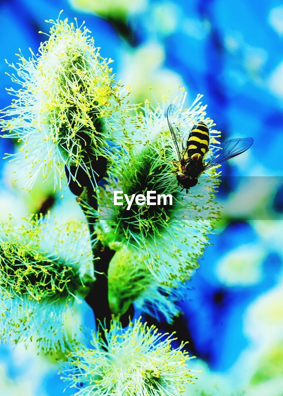 insect, animal themes, animals in the wild, one animal, nature, no people, close-up, beauty in nature, green color, day, outdoors, plant, bee, focus on foreground, growth, flower, freshness