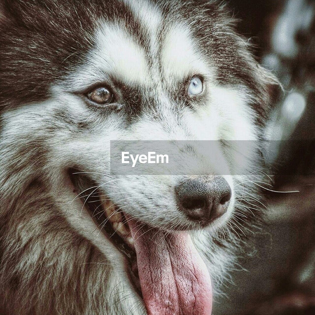 one animal, animal themes, pets, animal head, mammal, domestic animals, dog, close-up, whisker, looking at camera, portrait, no people, outdoors, day, nature