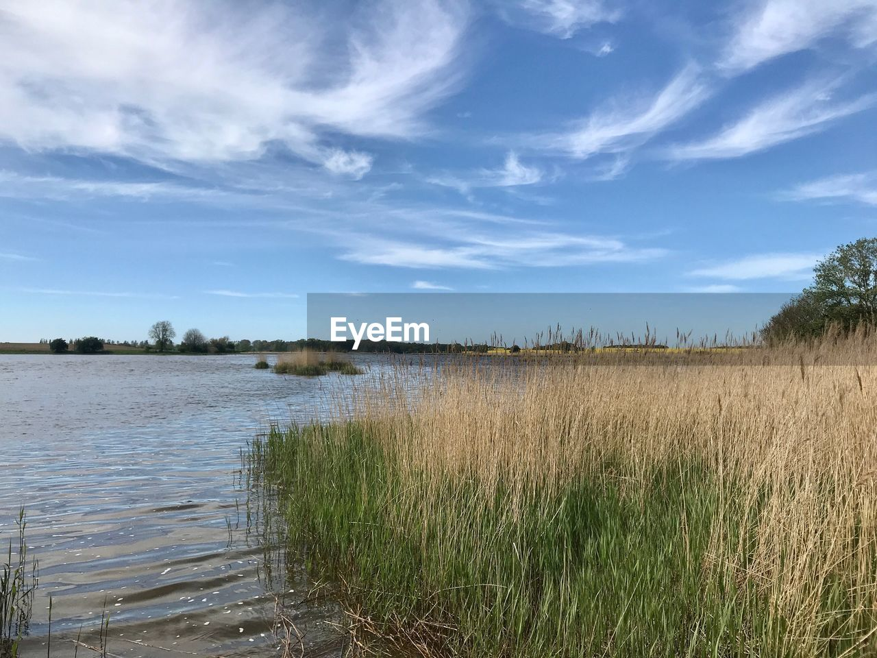 sky, plant, water, cloud - sky, tranquility, tranquil scene, scenics - nature, beauty in nature, grass, nature, land, no people, growth, environment, day, landscape, non-urban scene, field, lake, outdoors, timothy grass, marram grass