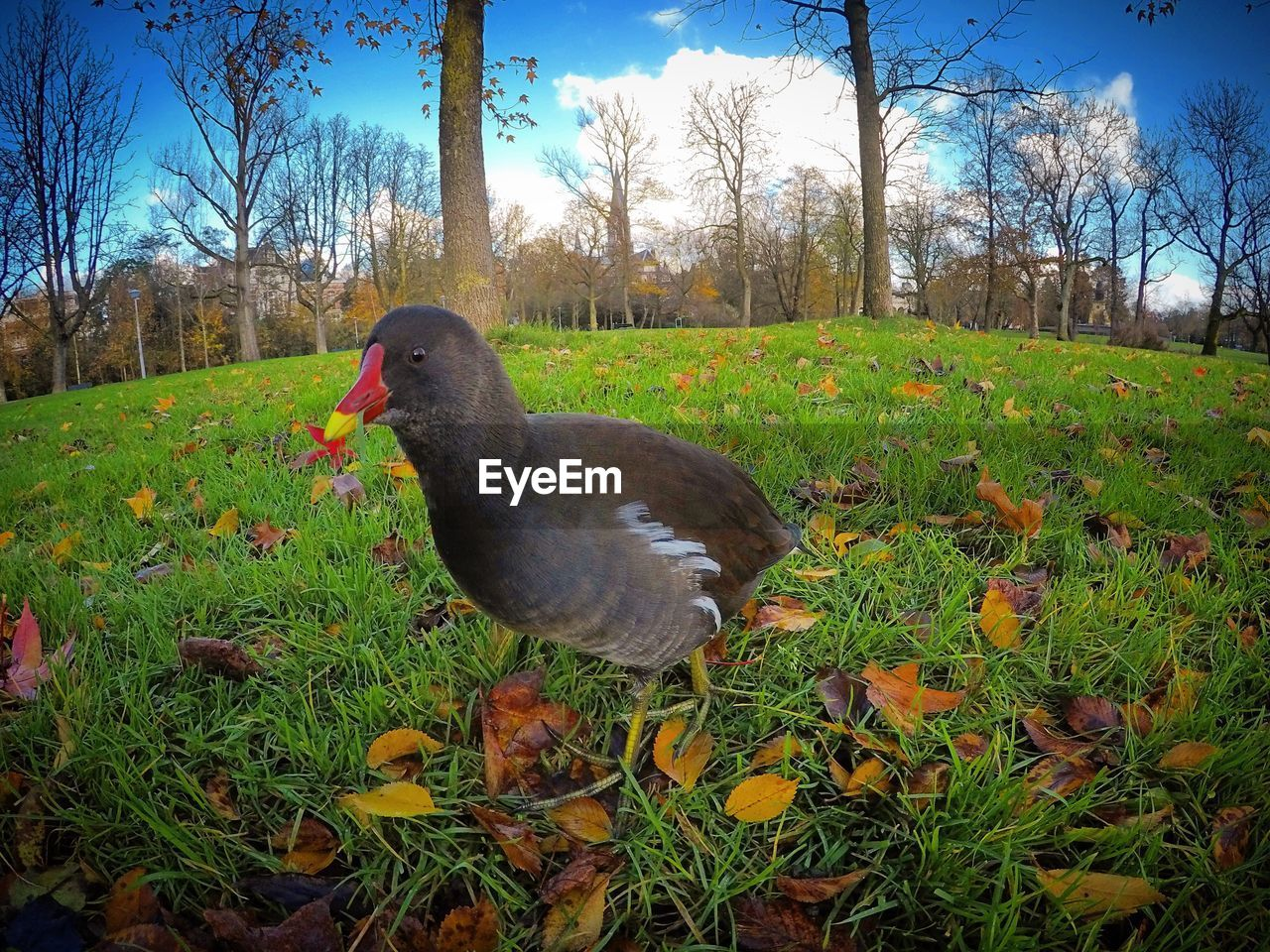 one animal, animal themes, field, grass, bird, nature, day, no people, tree, outdoors, animals in the wild, growth, sky, close-up