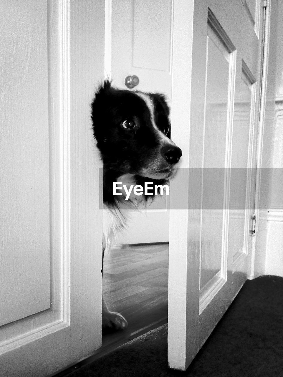 Dog Looking Through Open Door At Home