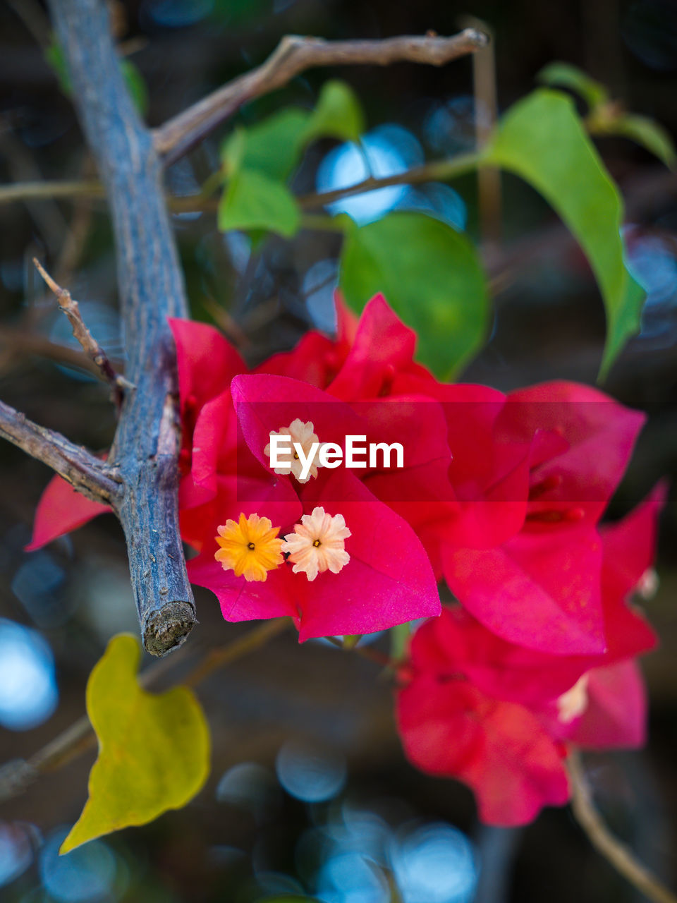 flowering plant, plant, flower, beauty in nature, freshness, vulnerability, growth, fragility, petal, inflorescence, close-up, flower head, focus on foreground, nature, pink color, day, plant part, no people, leaf, pollen