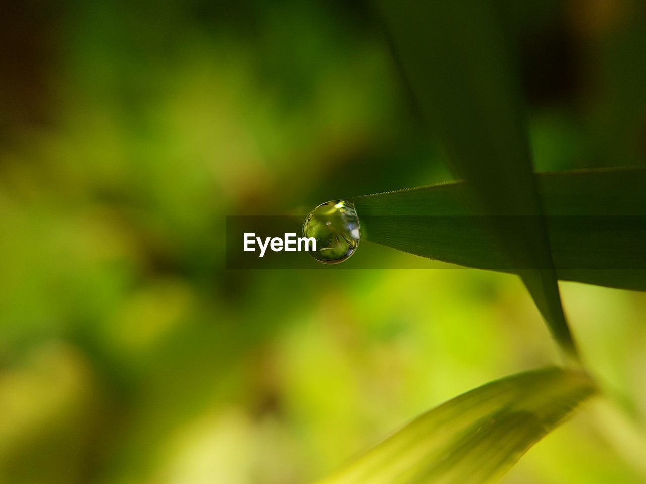 nature, plant, growth, beauty in nature, drop, fragility, green color, close-up, no people, outdoors, focus on foreground, day, leaf, freshness, water