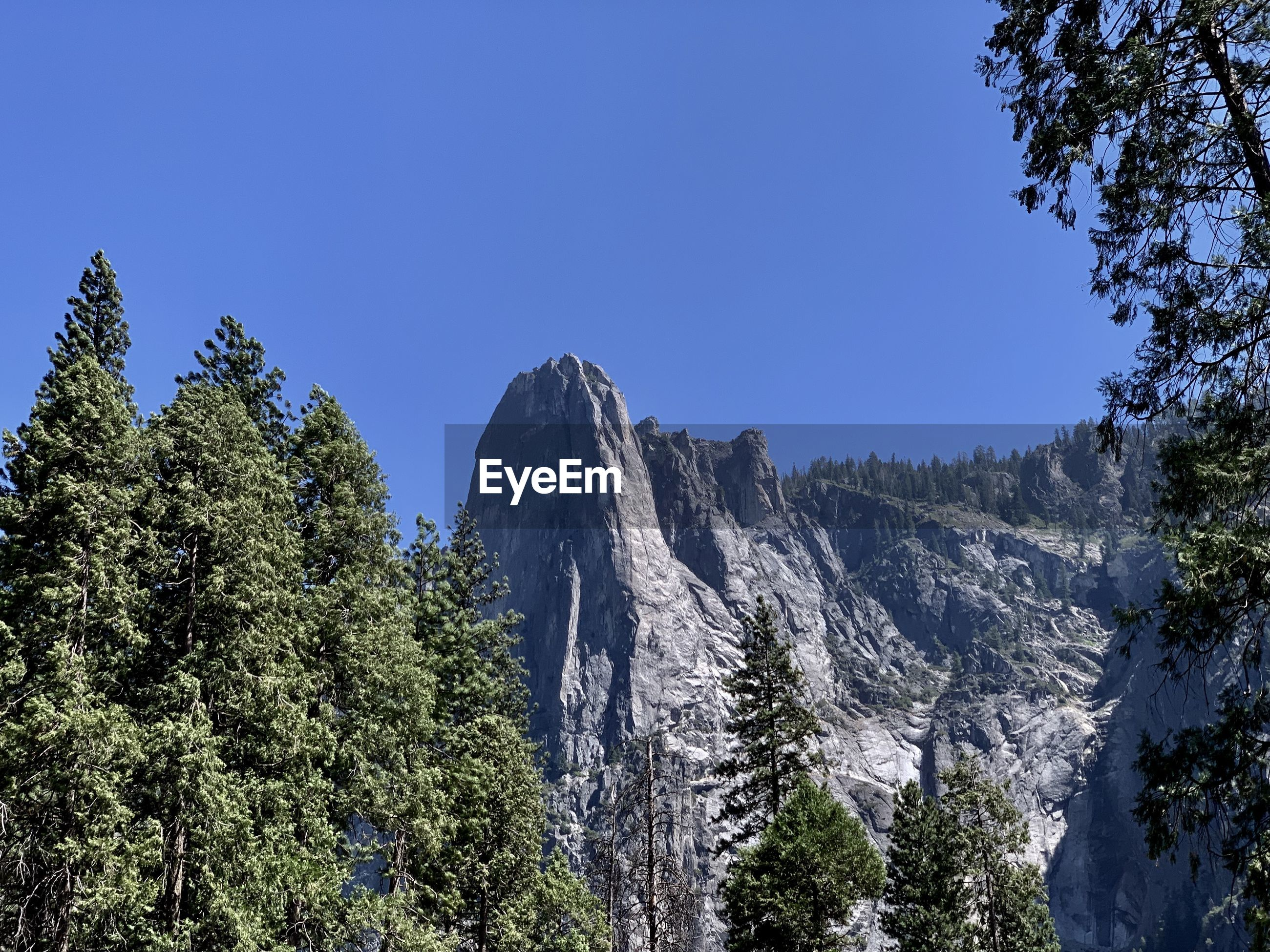 Low angle view of trees and mountains against clear blue sky