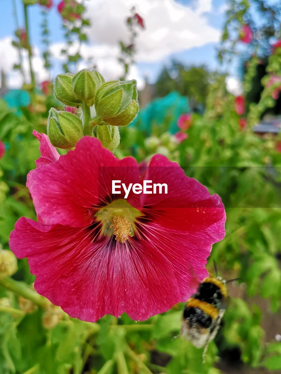 flower, flowering plant, freshness, plant, fragility, vulnerability, beauty in nature, petal, growth, close-up, flower head, inflorescence, focus on foreground, nature, day, no people, red, plant part, leaf, pollen, pollination