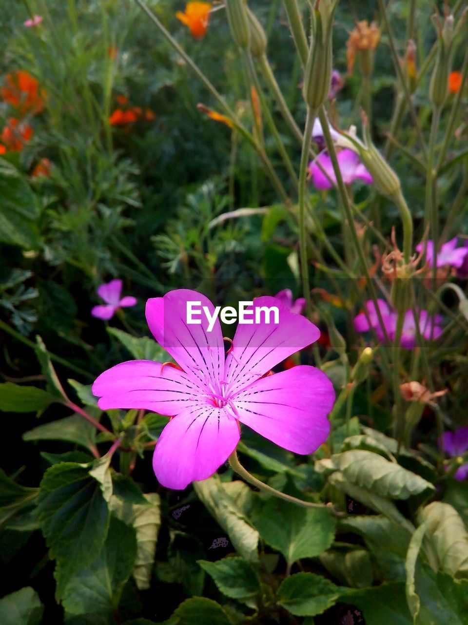 flower, petal, growth, flower head, fragility, freshness, nature, beauty in nature, day, high angle view, purple, plant, pink color, blooming, outdoors, no people, close-up, petunia, crocus, periwinkle