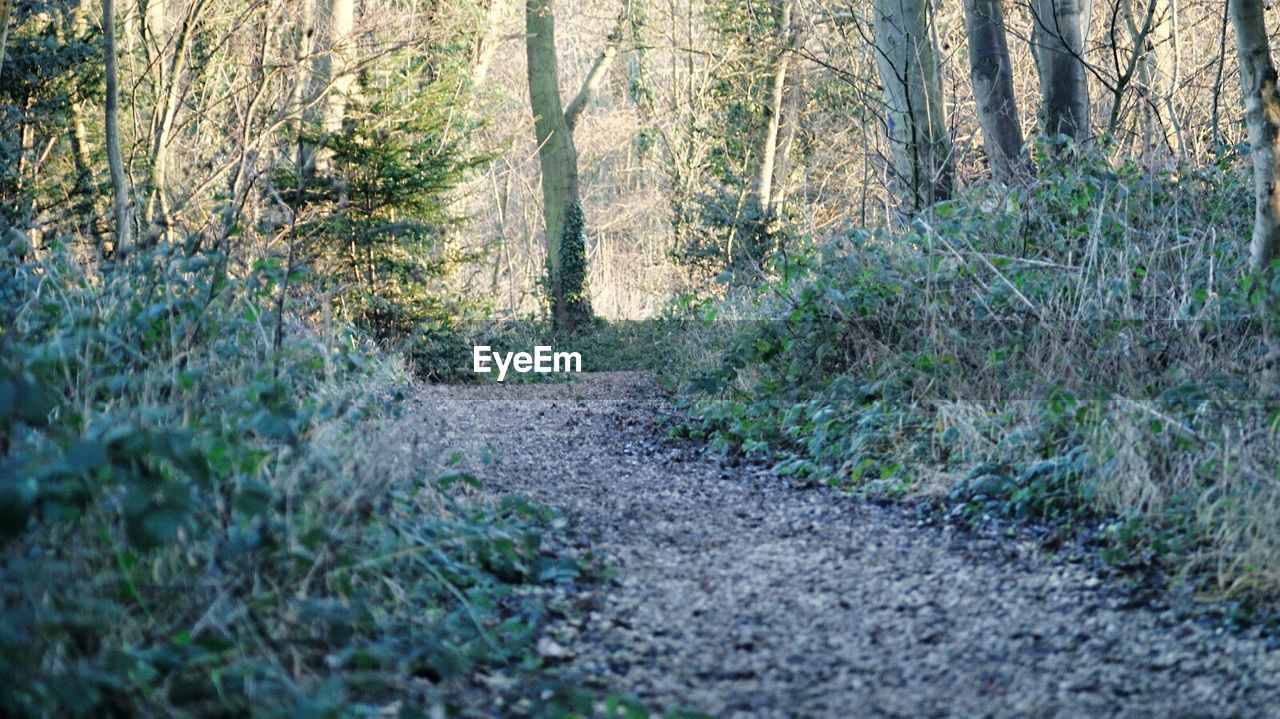 forest, nature, tree, plant, the way forward, no people, road, straight, day, outdoors, grass, beauty in nature
